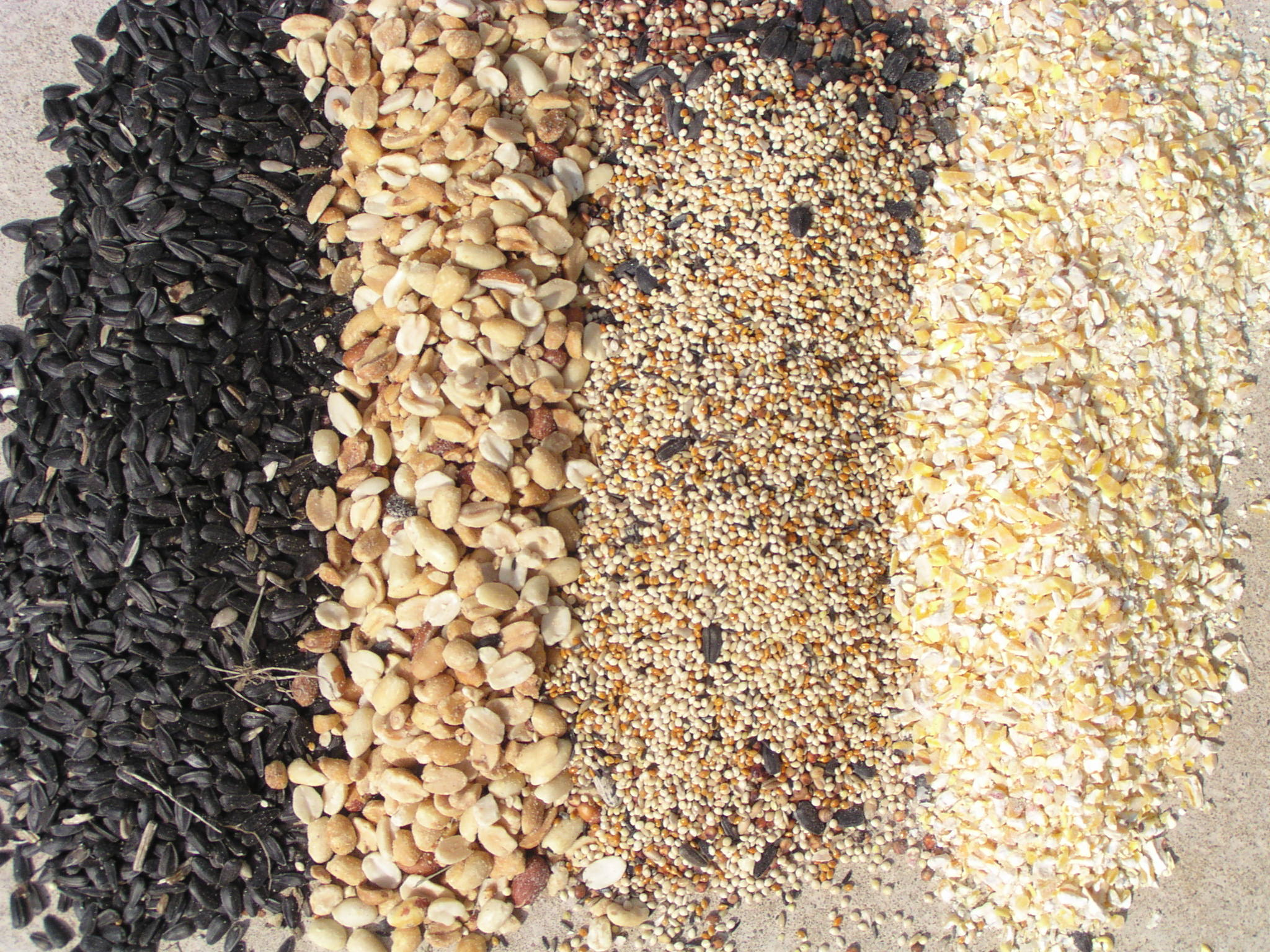 From left to right: Nyjer seed, peanuts, millet, and cracked corn.
